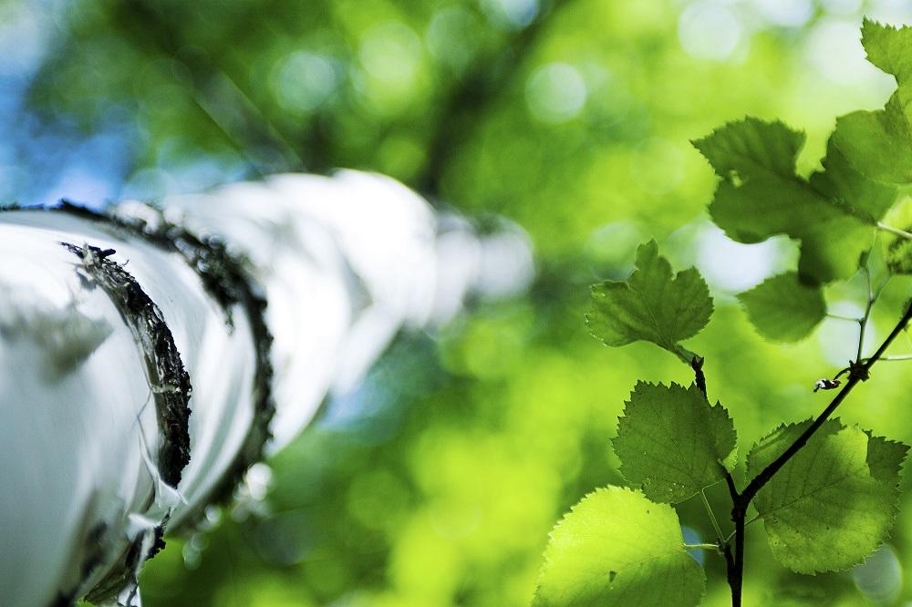 """PANELKONFERENZ """"Entwicklung und Einfluss von Maßnahmen auf ein nachhaltiges Wachstum des Biogas-Sektors in Serbien"""""""